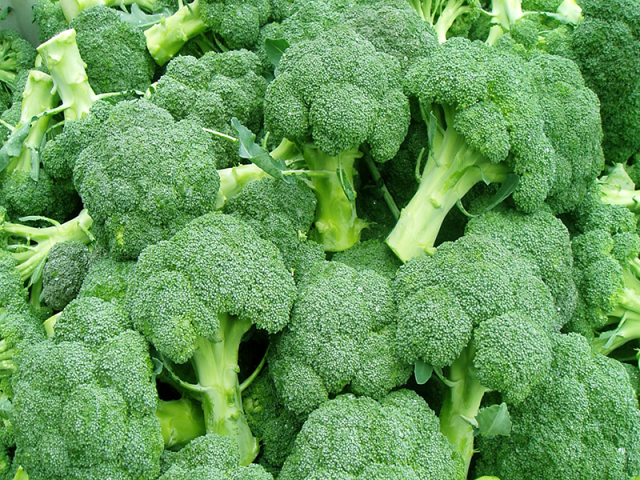 broccoli 4.png